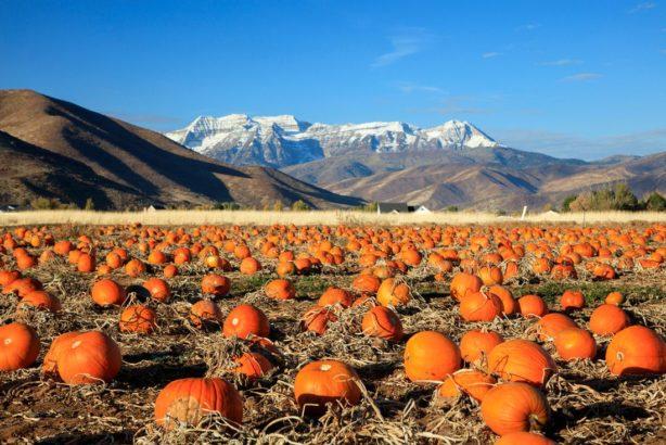 dyne-pumpkins-614x410.jpg