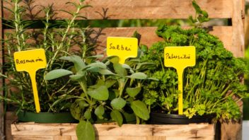 jmenovky-rostlin-jmenovky-jmenovka-352x198.jpg