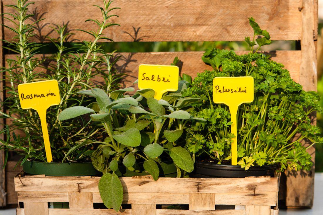 jmenovky rostlin, jmenovky, jmenovka,