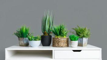 kaktus-cactus-352x198.jpg