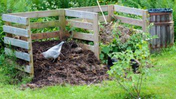 kompost-4-352x198.jpg