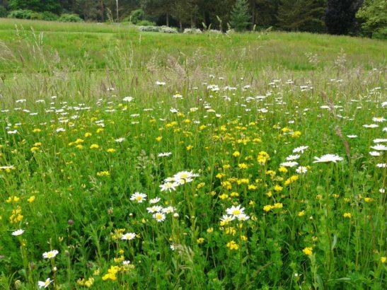 kvetnate-druhy-zvysuji-odolnost-travniku-vuci-suchu-a-navic-plni-i-ekologickou-funkci-diky-ni-jsou-navic-stale-oblibenejsi-547x410.jpg