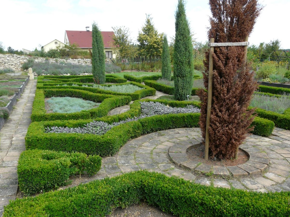 nektere-rostliny-nahradite-snadno-vymena-jinych-byva-slozitejsi-1200x1200.jpg