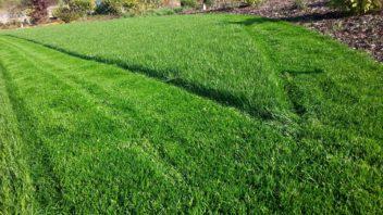 okrasny-travnik-je-treba-sekat-mnohdy-i-dvakrat-tydne-zalezi-na-vasich-pozadavcich-352x198.jpg