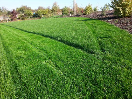 okrasny-travnik-je-treba-sekat-mnohdy-i-dvakrat-tydne-zalezi-na-vasich-pozadavcich-547x410.jpg