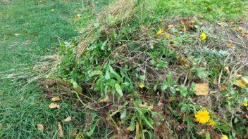 organicka-hmoza-ze-zahrady-by-rozhodne-nemela-skoncit-na-skladce-lze-z-ni-vyrobit-ruzne-typy-hnojiv-352x198.jpg
