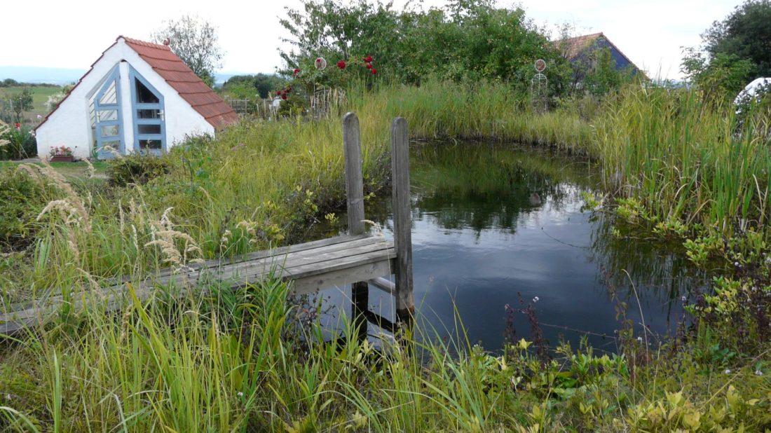 pokud-to-jen-trochu-jde-vyuzivejte-vodu-na-zahrade-efektivne.-jezirko-upravuje-mikroklima-zahrady-a-v-jeho-blizkosti-se-rostliny-nemusi-diky-rose-ani-zalevat-1100x618.jpg