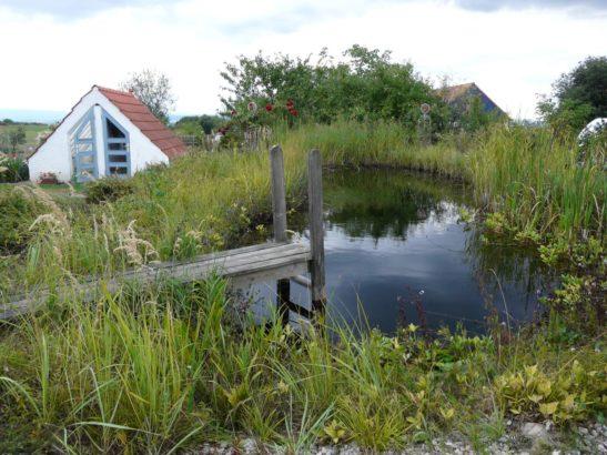 pokud-to-jen-trochu-jde-vyuzivejte-vodu-na-zahrade-efektivne.-jezirko-upravuje-mikroklima-zahrady-a-v-jeho-blizkosti-se-rostliny-nemusi-diky-rose-ani-zalevat-547x410.jpg