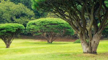 poustni-zahrada-plna-mnohokmenu-352x198.jpg
