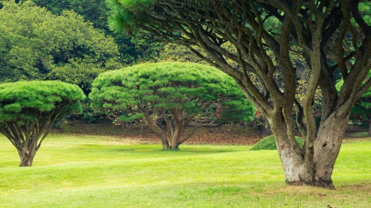 poustni-zahrada-plna-mnohokmenu-728x409.jpg