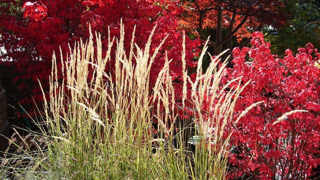 travy-podzimni-travy-podzimni-zahrada-zahrada-na-podzim-3-1100x618.jpg