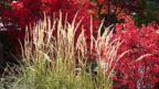 travy-podzimni-travy-podzimni-zahrada-zahrada-na-podzim-3-144x81.jpg