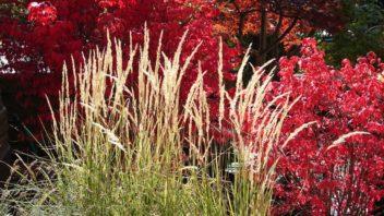 travy-podzimni-travy-podzimni-zahrada-zahrada-na-podzim-3-352x198.jpg