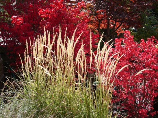 travy-podzimni-travy-podzimni-zahrada-zahrada-na-podzim-3-547x410.jpg