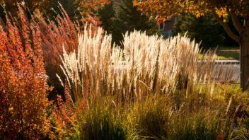 travy-podzimni-travy-podzimni-zahrada-zahrada-na-podzim-352x198.jpg