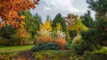 travy-podzimni-travy-podzimni-zahrada-zahrada-na-podzim-5-352x198.jpg