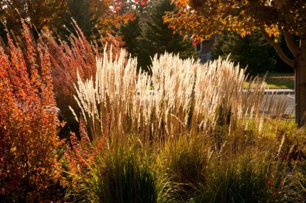 travy-podzimni-travy-podzimni-zahrada-zahrada-na-podzim-618x410.jpg