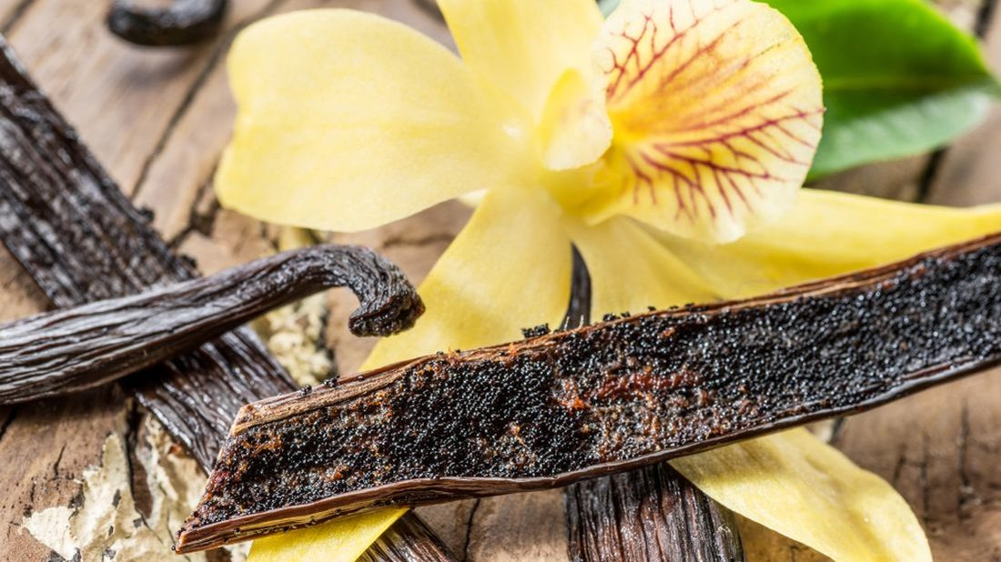 vanilka-prava-vanilla-planifolia-vanilka-5-1100x618.jpg