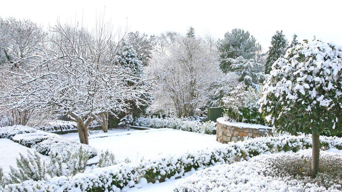 zahrada-v-zime-1100x618.jpg