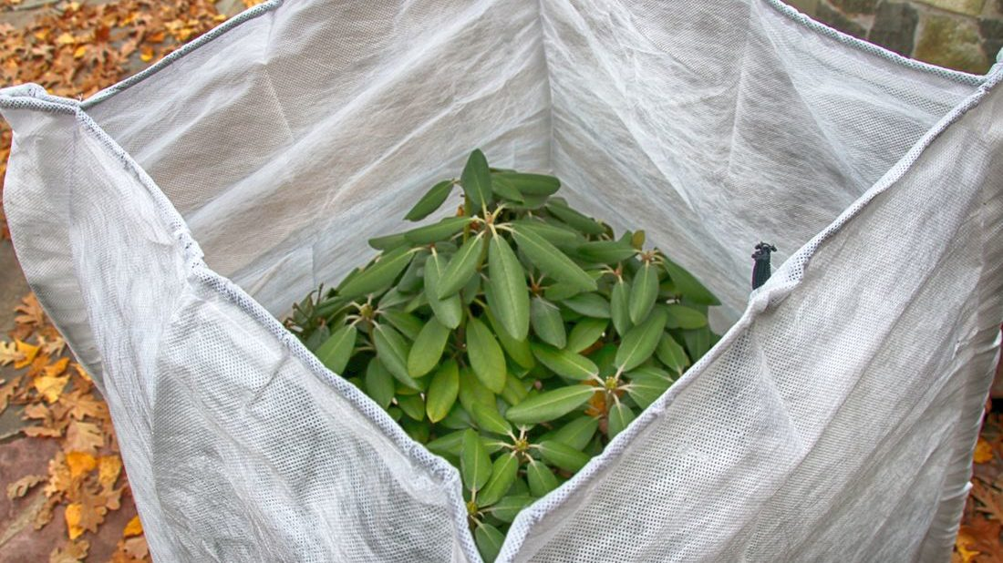 zazimovane-rostliny-zazimovani-rostlin-geotextilie-1100x618.jpg