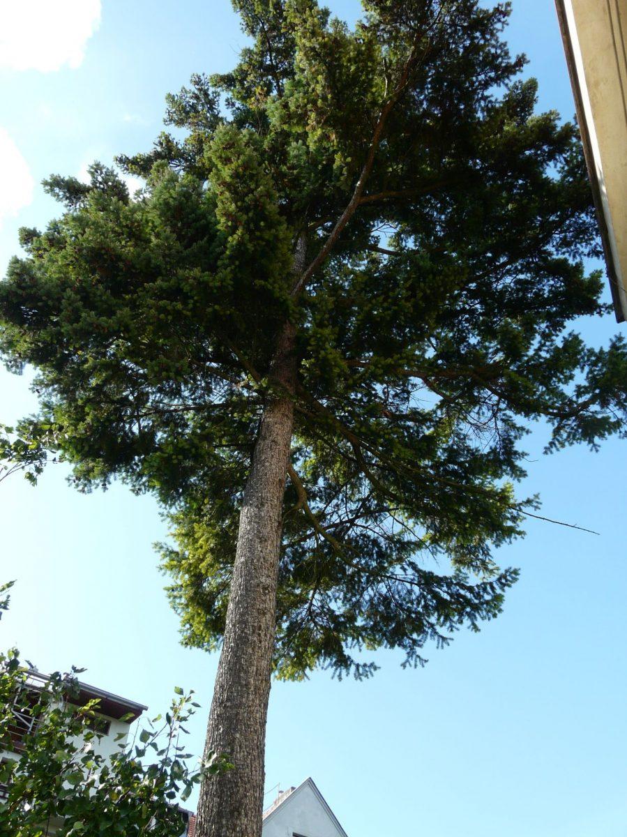 zrejme-nejvetsi-dilema-prinasi-vzrostle-stromy-v-prime-blizkosti-domu-1200x1200.jpg
