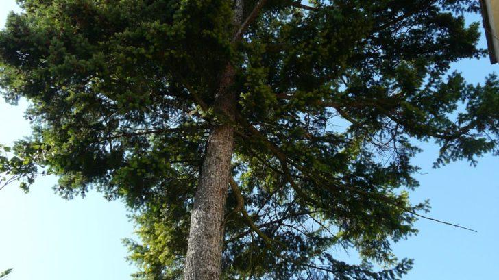 zrejme-nejvetsi-dilema-prinasi-vzrostle-stromy-v-prime-blizkosti-domu-728x409.jpg