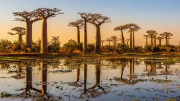 baobab-352x198.jpg