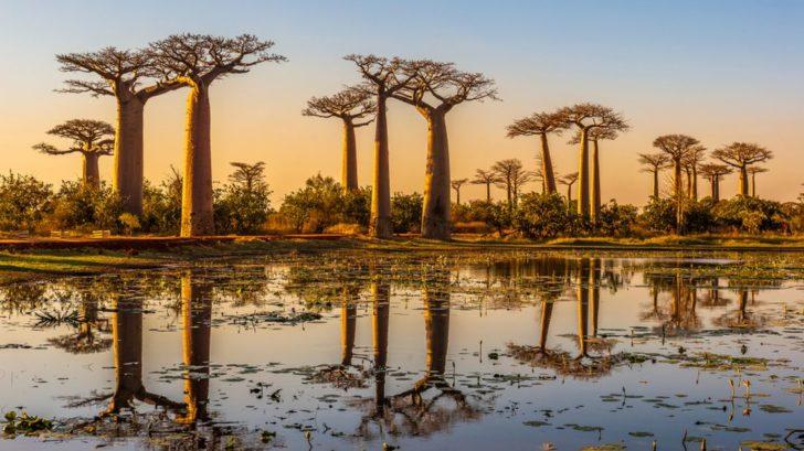 baobab-728x409.jpg