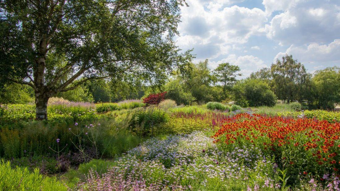 divoka-zahrada-1100x618.jpg