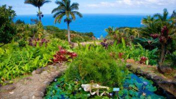 havajska-zahrada-352x198.jpg