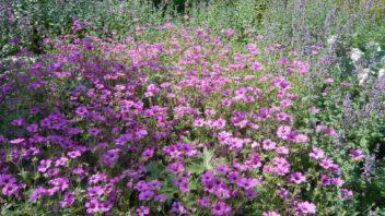 kakosty-prekvapi-dlouhou-dobou-kvetu-a-vyraznou-vuni-352x198.jpg
