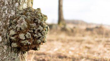 rakovina-stromu-352x198.jpg