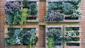 vertikalni-zahrada-z-palet-352x198.jpg