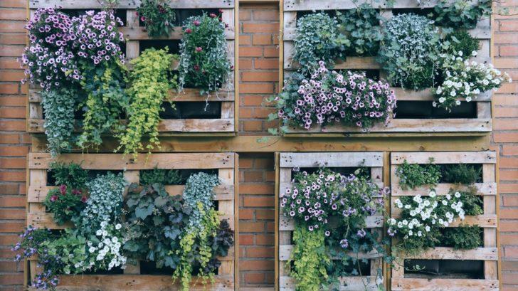 vertikalni-zahrada-z-palet-728x409.jpg