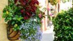 barevny-truhlik-pomnenky-144x81.jpg