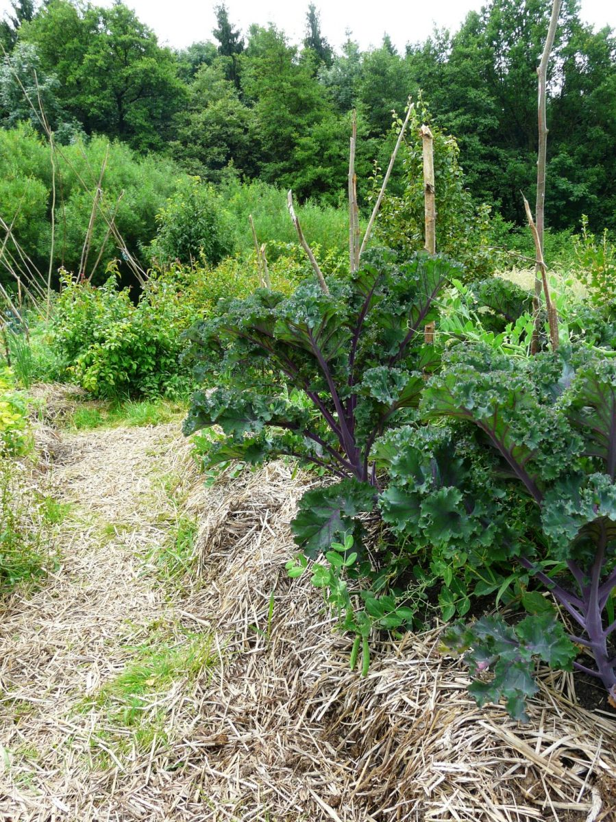 i-zeleninove-zahony-se-vyplati-mulcovat-pouzijte-treba-slamu-1200x1200.jpg