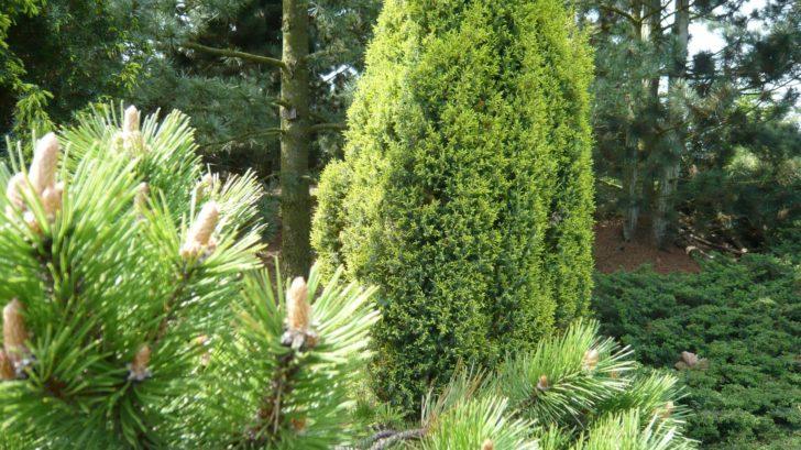 jehlicnany-do-zahrady-patri-ale-nesmi-se-to-s-nimi-prehanet-728x409.jpg