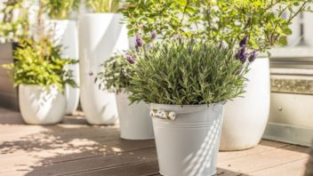 na-terasu-patri-zejmena-vonici-rostliny-a-byliny-jako-je-levandule-na-snimku-nebo-rozmaryn-352x198.jpg