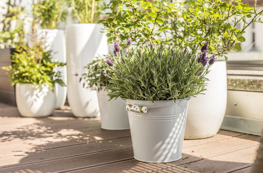 na-terasu-patri-zejmena-vonici-rostliny-a-byliny-jako-je-levandule-na-snimku-nebo-rozmaryn.jpg