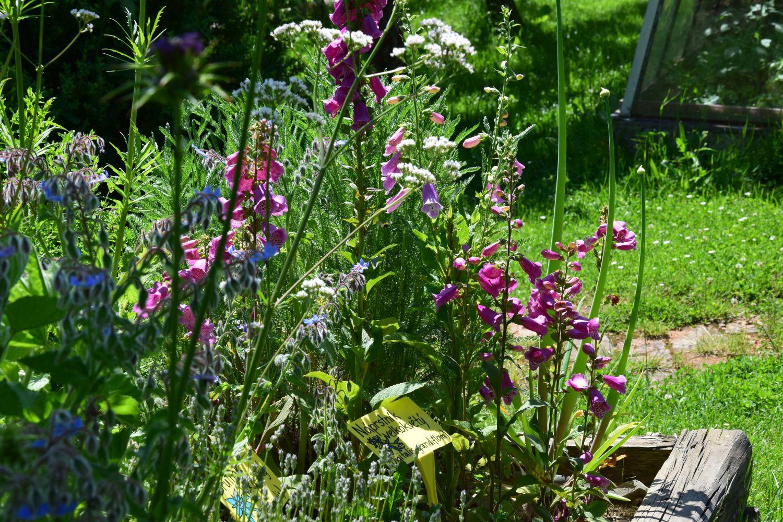 naprstnik-pusobi-hezkym-prirodnim-dojmem-a-skvele-si-sedne-i-s-jinymi-rostlinami.jpg
