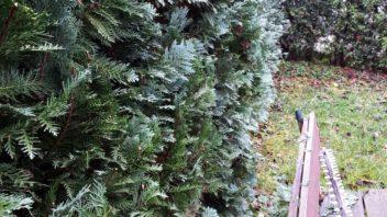 nektere-druhy-jehlicnanu-mohou-strhavat-veskerou-pozornost-na-sve-netypicke-zbarveni-352x198.jpg