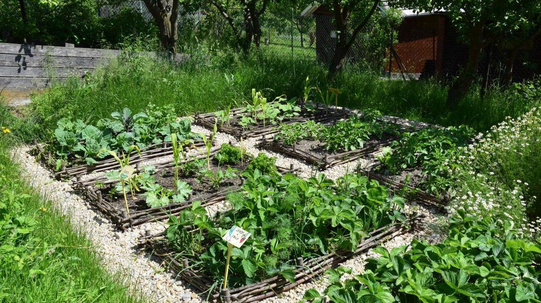 odhalena-puda-zeleninovych-zahonu-byva-idealnim-mistem-pro-raseni-plevelu-1100x618.jpg