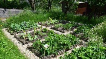 odhalena-puda-zeleninovych-zahonu-byva-idealnim-mistem-pro-raseni-plevelu-352x198.jpg