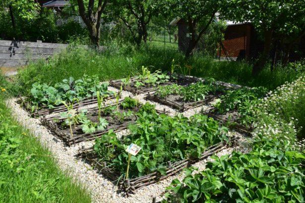 odhalena-puda-zeleninovych-zahonu-byva-idealnim-mistem-pro-raseni-plevelu-615x410.jpg