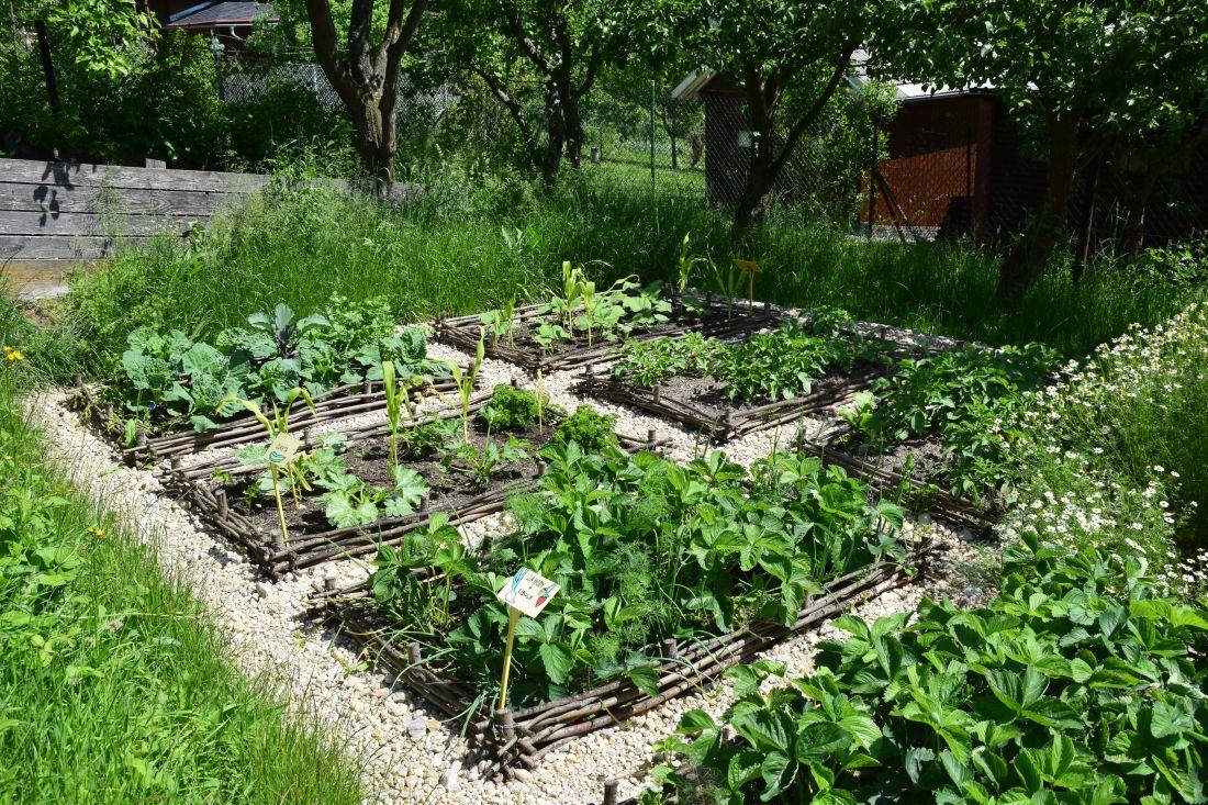 odhalena-puda-zeleninovych-zahonu-byva-idealnim-mistem-pro-raseni-plevelu.jpg