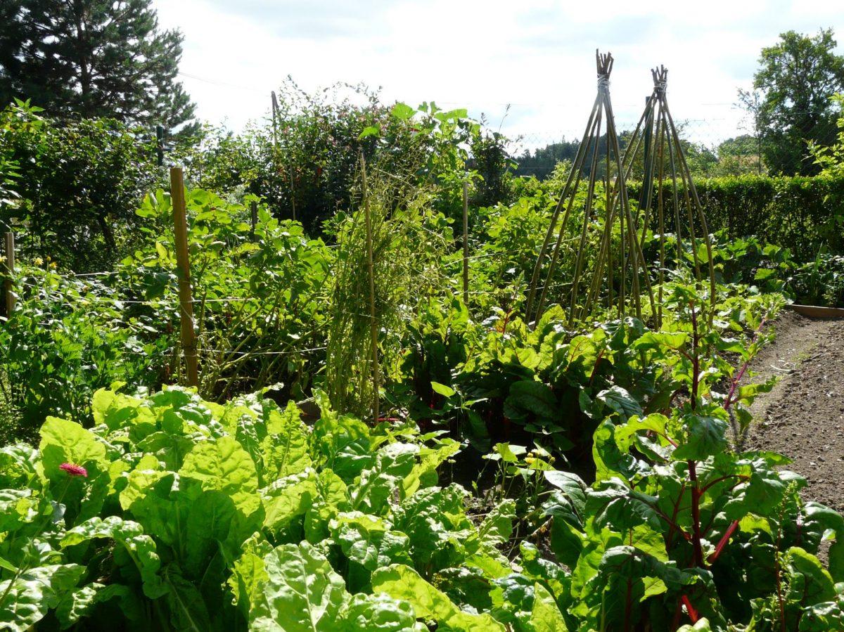 pokud-pestujete-zeleninu-v-hustem-zapoji-bude-vas-trapit-plevel-jen-brzy-po-vysadbe-sadby-1200x1200.jpg