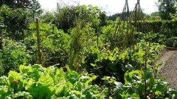 pokud-pestujete-zeleninu-v-hustem-zapoji-bude-vas-trapit-plevel-jen-brzy-po-vysadbe-sadby-352x198.jpg