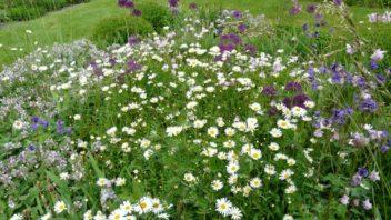 prirodni-zahrade-slusi-pestra-smes-divokych-ci-prirodnich-druhu-352x198.jpg