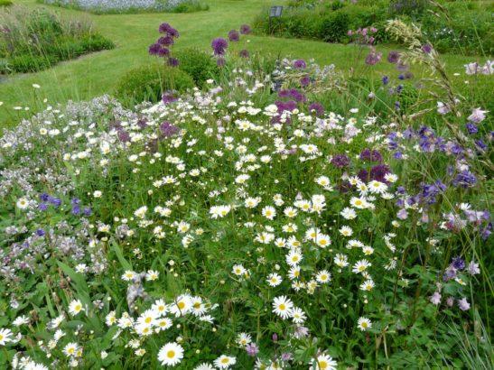 prirodni-zahrade-slusi-pestra-smes-divokych-ci-prirodnich-druhu-547x410.jpg