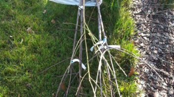 prostokorenne-stromky-jsou-dostupne-brzy-na-jare-nebo-naopak-na-konci-sezony-tedy-na-podzim-352x198.jpg